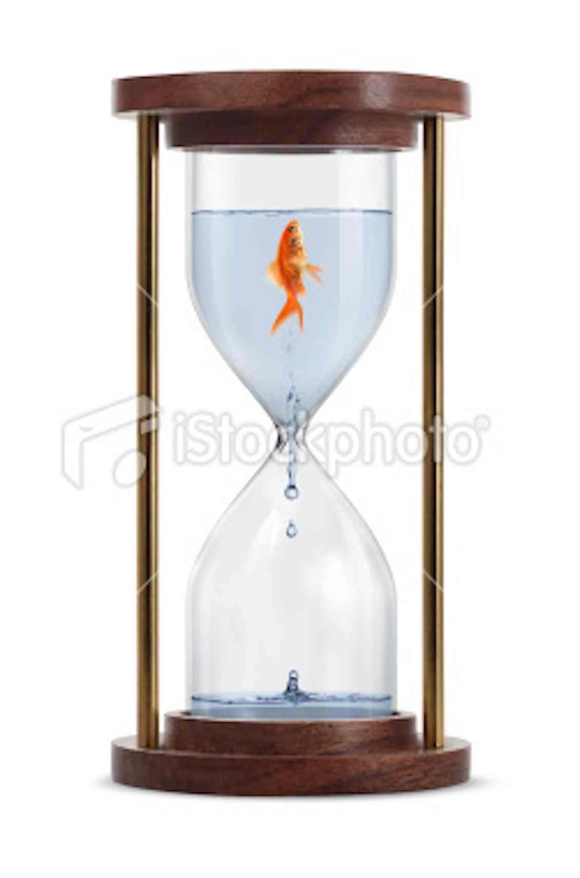 stock-photo-20078299-goldfish-in-hourglass